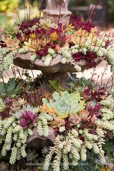 This succulent fountain is so beautiful! I love all the colors and contrast!