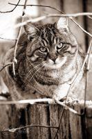 Cat Portrait by fucute