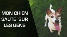 Beaucoup de chiens sautent sur les invités quand ceux-ci arrivent à la maison. Les conseils d'Irène Sautelet, éducateur canin, pour apprendre au chien à ne plus sauter sur les gens Ceux Ci, Yorkshire Terrier, Chihuahua, Corgi, France, Pets, Animals, Patience, Joy