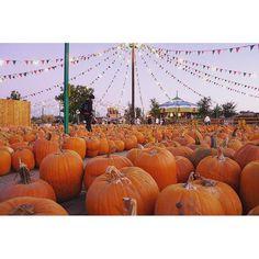 """#christmas #halloween #xmas #winter #fall #autumn #tumblr #2015 #like4like #spam4spam #follow4follow #christmastime #christmastree #cold #pumpkin #trickortreat #sweaters #love #seasonal #holidays #merrychristmas #happyhalloween"" Photo taken by @pumpkinsnow_ on Instagram, pinned via the InstaPin iOS App! http://www.instapinapp.com (10/02/2015)"