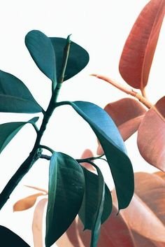 Plant Prints Printable Wall Art B Leaf Prints, Flower Prints, Art Prints, Art Zen, Decoration Entree, Plant Background, Background Ideas, Art Watercolor, Painting Abstract