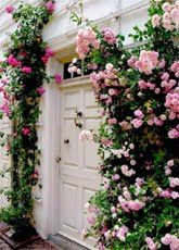 I wouldn't mind if these climbing roses were on my detached garage vs the typical ivy that is a pain in the butt to get off.