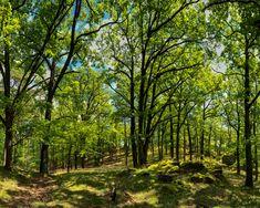 #wachauwandern #wandern #vineawachau #visitniederoesterreich #visitaustria #donauniederoesterreich #wachau #austria #igersaustria #österreich #loweraustria #streetofaustria #austrianwine #lovemyjob #wald #wood #sunlight #middaysun #sonne #hiking #wachauphoto Wachau Austria, Country Roads, Sun, Hiking, Woodland Forest