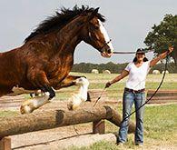 TVShow - Downunder Horsemanship