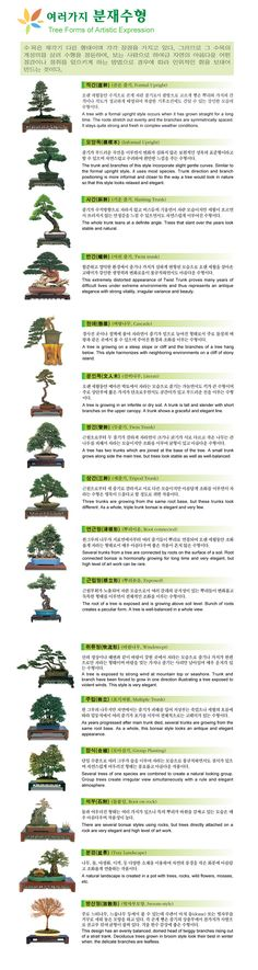 Algunos consejos e ideas sobre bonsai // Some tips and ideas about bonsai ~~~ Welcome to Korea Bonsai Association.