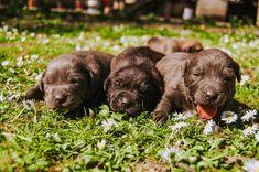 Best Puppy Formula for your Pet - puppieslove.net