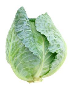 How to Grow Cabbage  http://www.vegetable-garden-guide.com/growing-cabbage.html