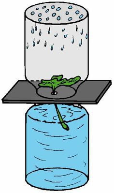 Check Out Plant Transpiration!