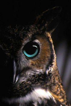 Owl look. Mirada de buho.