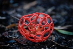 Clathrus ruber From the Bay Area Mycological Society