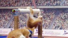 Kitten Olympics are in full swing