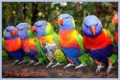 papagai bilder - Bing Bilder