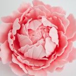 How to make a gum paste peony in 2 parts - really, really only for the brave