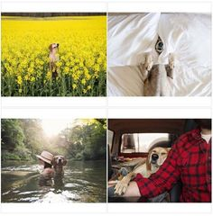 Per la nostra rubrica #Viralgram torna protagonista un amico a 4 zampe: Maddie, il fedele compagno di Theron Humphrey, un fotografo americano che viaggia per gli States e cattura momenti di vita quotidiana e paesaggi naturali spettacolari. Seguite l'account #Instagram e i loro viaggi in giro per gli USA.