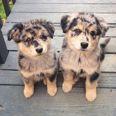 cute dogs 10+ . for more http://artonsun.blogspot.com/2015/03/cute-dogs-10-for-more.html