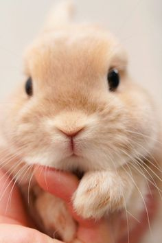 Cute bunny – Meike L - Baby Animals Cute Baby Bunnies, Funny Bunnies, Cute Babies, Bunny Bunny, Cute Little Animals, Cute Funny Animals, Cute Creatures, Animals Beautiful, Majestic Animals