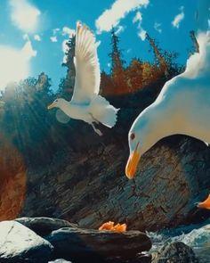 Beautiful Nature Scenes, Beautiful Photos Of Nature, Beautiful Fantasy Art, Beautiful Nature Wallpaper, Amazing Nature, Beautiful Birds, Background Wallpaper For Photoshop, Love Background Images, Aesthetic Photography Nature