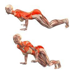 Easy staff pose - Ardha Chaturanga Dandasana - Yoga Poses