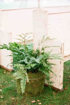 Potted plants along ceremony aisles is a wedding trend that we're loving right now. Click through to discover all of the ways to add floral arrangements to your wedding's ceremony space. Fern Wedding, Wedding Isles, Botanical Wedding, Wedding Ceremony, Wedding Flowers, Garden Wedding, Wedding Stuff, How To Dress For A Wedding, Aisle Flowers