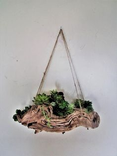 Rustic wall shelf branch shelf Driftwood displayRustic air - All For Herbs And Plants Driftwood Planters, Driftwood Shelf, Driftwood Projects, Driftwood Ideas, Rustic Wall Shelves, Rustic Walls, Shelf Wall, Rustic Art, Beach Crafts