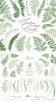 The Ferns Collection of 52 high quality hand painted watercolor separate floral Elements. Perfect graphic for wedding invitations, greeting cards, photos, posters, quotes and more.  -----------------------------------------------------------------  INSTANT DOWNLOAD Once payment is cleared, you can download your files directly from your Etsy account.  -----------------------------------------------------------------  This listing includes:  52 x Separate Floral Elements   All files in PNG…