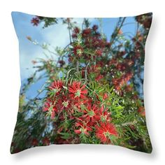 Blossoming Bottlebrush Throw Pillow for Sale by Aimee L Maher Photography and Art Visit ALMGallerydotcom #homedecor #livingroom #flower