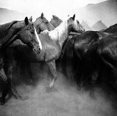 "Cowboy | Adam Jahiel – ""The Last Cowboy"" part 1"