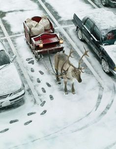 Even Santa Claus has to make a quick stop. Reindeer parking, Christmas, sleigh, snow.