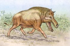 Cypretherium is named for the Cypress Hills formation of Canada.  It is an Entelodont, a relative of the better known Archaeotherium, from which it differed by having just a single pair of 'bu...
