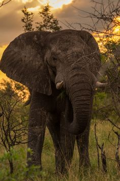 Elephant | by Michaela Herbst