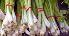 Name Of Vegetables, Growing Vegetables At Home, Green Onions Growing, Growing Greens, Garlic Bulb, Peach Trees, Hobby Farms, Allium, French Onion