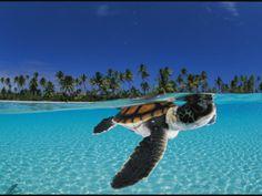i fucking love turtles.