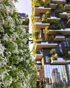 Bosco Verticale & gelsomini  #boscoverticale #gelsomini #jasmine #spring by r0bertacerri
