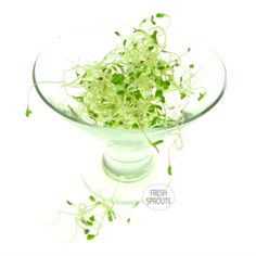 Alfalfa sprouts in a glass - sprouting glass ? :) by Fresh Sprouts