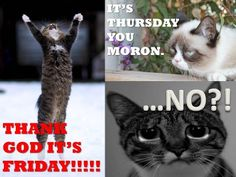 Thursday? Thursday Humor, Grumpy Cat, Thank God, Good Morning, Cats, Funny, Movie Posters, Animals, Laughing
