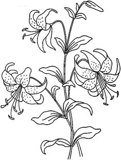 realistic flowers coloring pages print