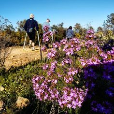 Best way to start the day Nordic Walking, Start The Day, South Africa, Plants, Photos, Pictures, Photographs, Plant, Planting