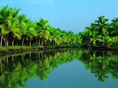 Kerala God's own Country: Click here for More details - http://www.travelmasti.com/domestic/Kerala/index.htm