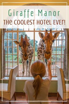 Giraffe Manor in Nairobi, Kenya is one of the coolest places I've ever stayed! This is what it was like.