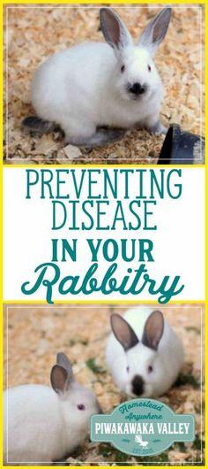 72 Best Rabbits images in 2019 | Rabbits, Bunnies, Bunny