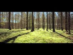 The World's Most Relaxing Film - 7 minutes of calm....relax and let the noise fade away. Tranquil and peaceful nature
