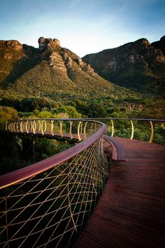 Steely Snake - Boomslang photo by Jan Ras Landscape Architecture, Landscape Design, Snake Photos, Bridge Design, Tree Canopy, Pedestrian Bridge, Garden S, How To Level Ground, Adventure Is Out There