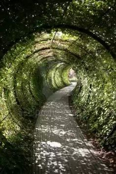 Garden Tunnel in Alnwick Castle's Poison Gardens (United Kingdom)