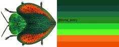 Leaf Beetle: original image via http://animalworld.tumblr.com/page/35