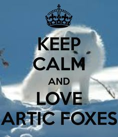 KEEP CALM AND LOVE ARTIC FOXES .