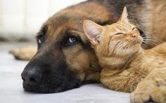 Los mejores vídeos de gatos y perros durmiendo juntos