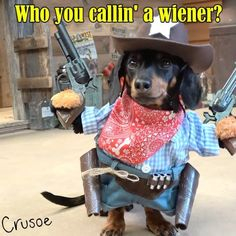 """Crusoe the celebrity dachshund — """"Saloon Showdown!! Tag a friend who needs to see..."""