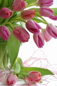 Pink Tulips - my favorite flower Purple Tulips, Tulips Flowers, Exotic Flowers, Pretty Flowers, Fresh Flowers, Spring Flowers, Tulips Garden, Planting Flowers, Bouquet