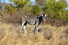 Madikwe Game Reserve, North West, South Africa | by South African Tourism Game Reserve, North West, Places To See, South Africa, Tourism, African, Spaces, Animals, Turismo