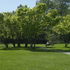 Vancouver is beautiful.  #Park #Green
